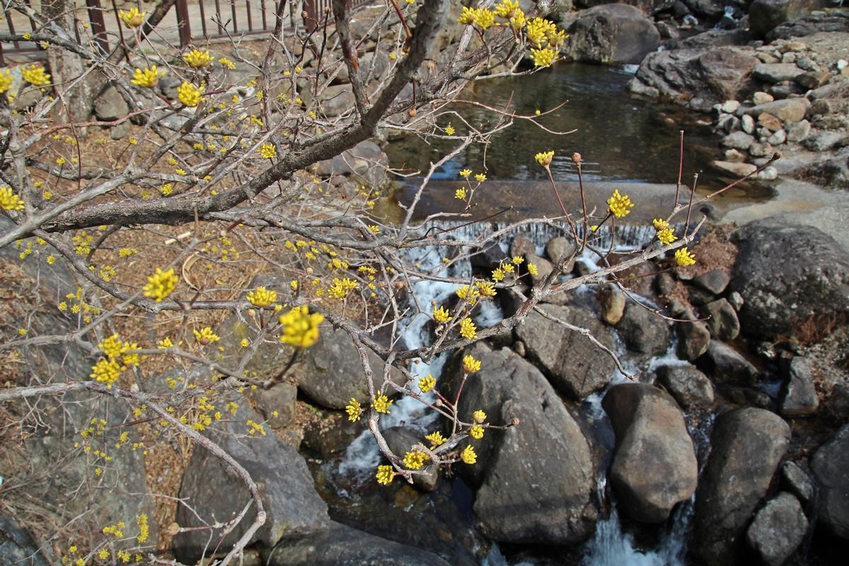 이제 완연한 봄이다. 산수유마을에는 노란 빛깔의 봄이 찾아왔다.