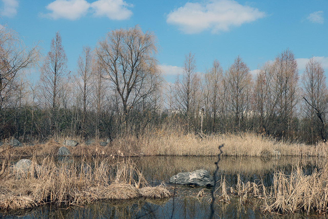 봄 기운이 느껴지는 고양생태공원.