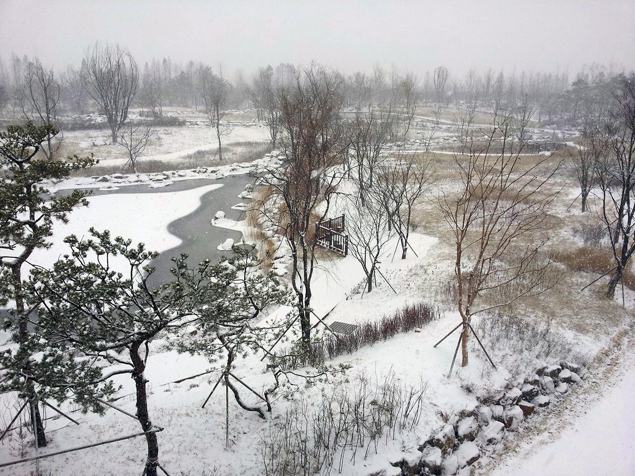 고양생태공원의 겨울