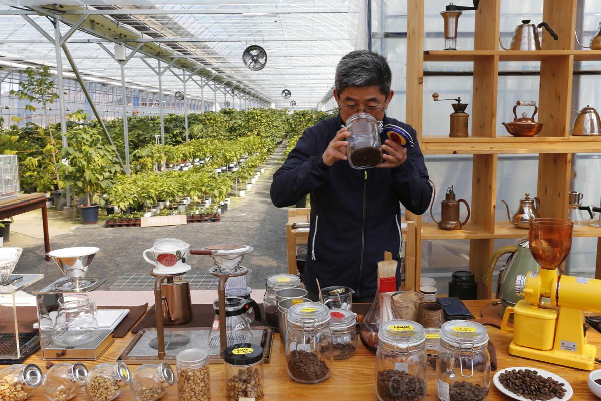 담양커피농장의 체험장과 농원 풍경. 커피나무가 자라는 농원과 체험장이 나란히 붙어 있다. 임영노 씨가 커피체험을 준비하고 있다.