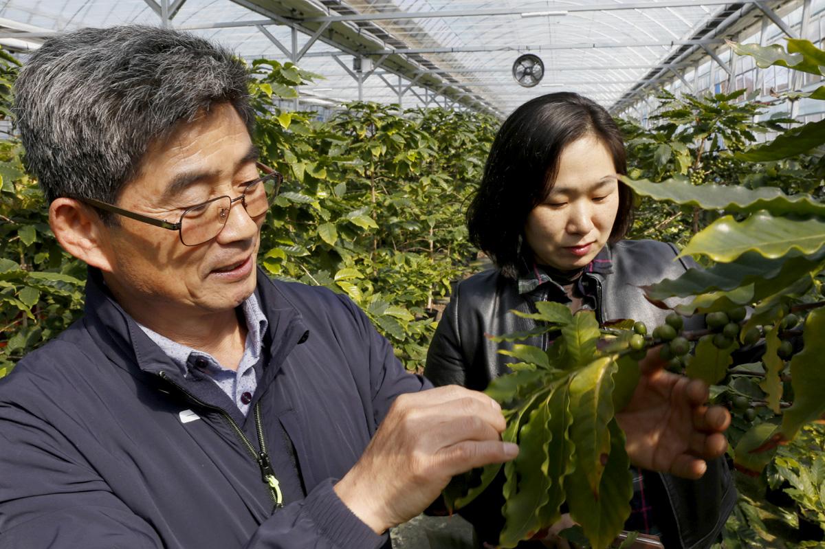 임영주 대표의 동생 영노 씨가 커피농장을 찾은 체험객에게 커피나무에 대해 설명해 주고 있다.