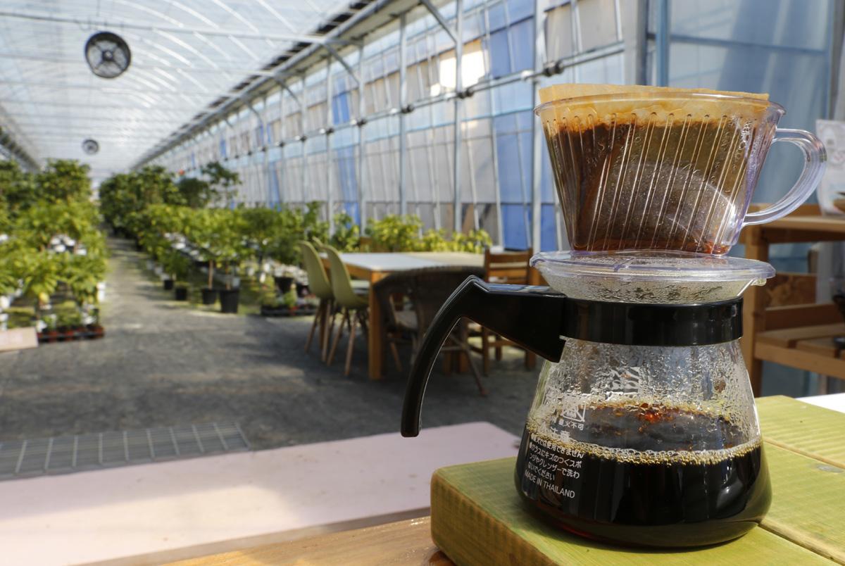 담양커피농장의 체험장과 농원 전경. 임영주 대표는 앞으로 커피나무 재배면적을 늘리면서 지역사회와 상생하는 사회적기업으로 키워나가겠다고 말했다.