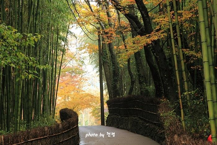 소쇄원의 대숲 대숲은 자연히 세속과 경계가 되어 말 그대로 맑고 깨끗하게 세속을 벗어난다.