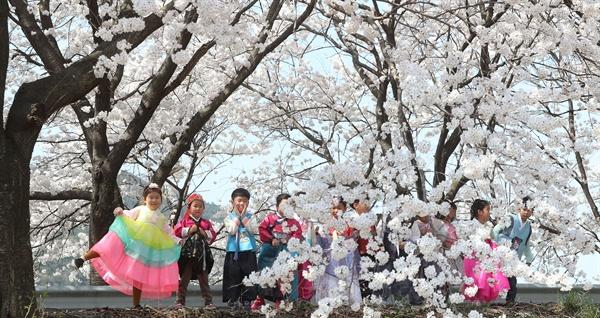 함양 병곡면 한 도로변의 벚꽃.