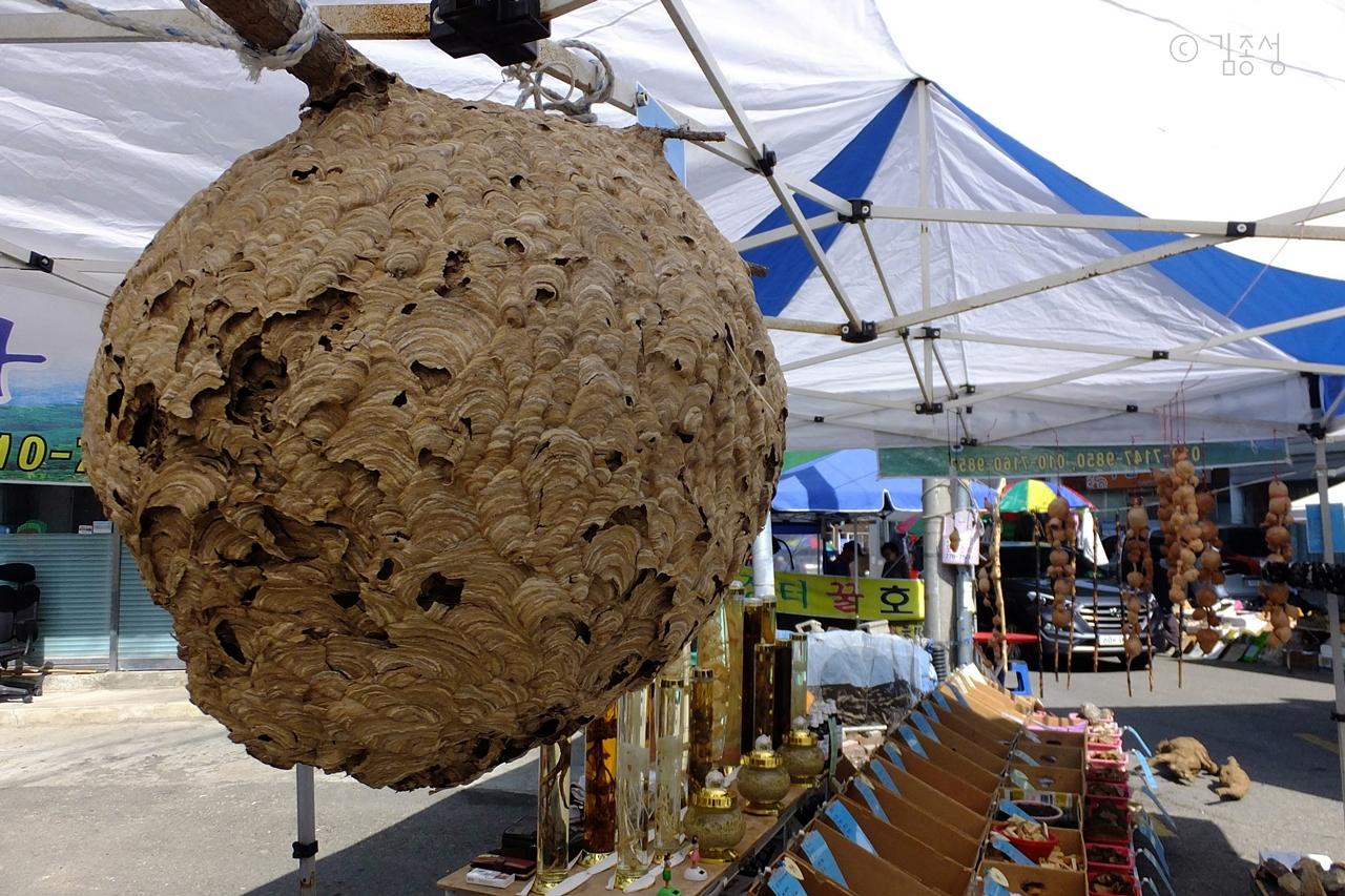 강구시장 오일장터에서 파는 말벌집.