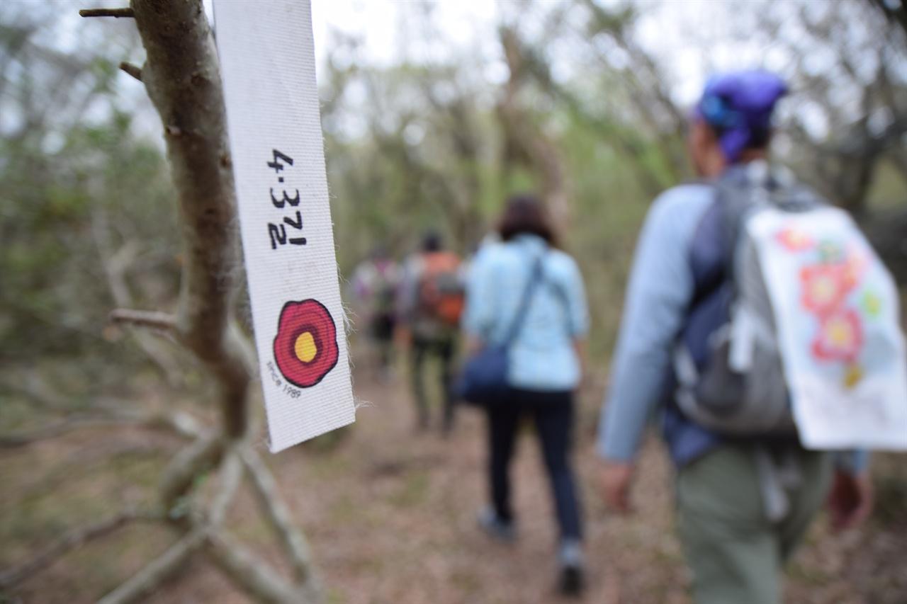 4.3 유적지 동백꽃 리본 사려니숲길에서 이덕구 산전을 향하는 길