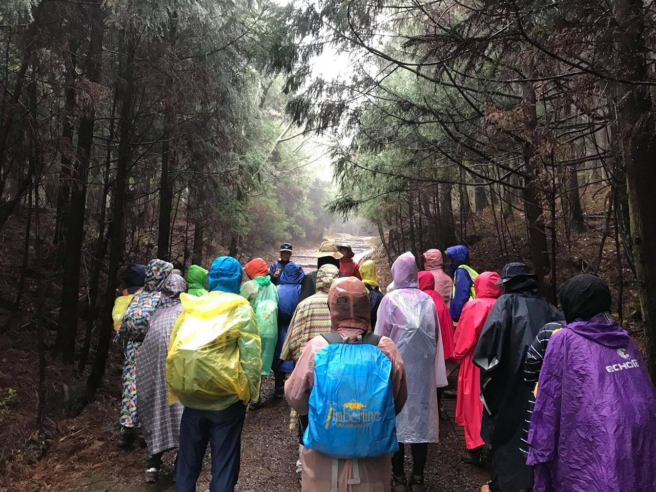 비오는 날의 숲속 녹색순례 참가단이 곶자왈을 걷는다