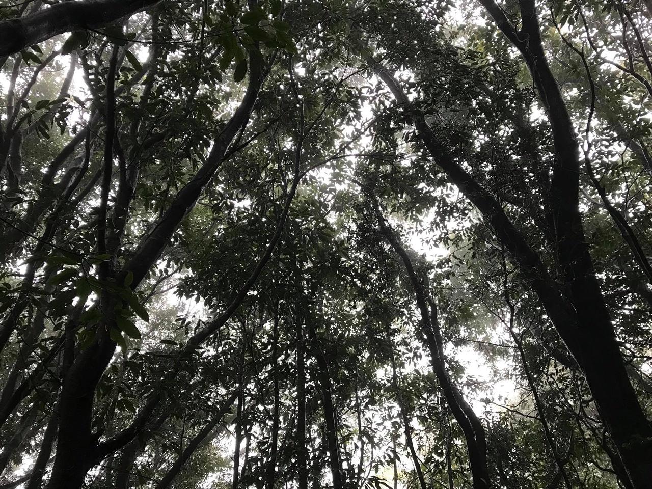 비오는 날의 숲 용암이 흘러간 길을 따라