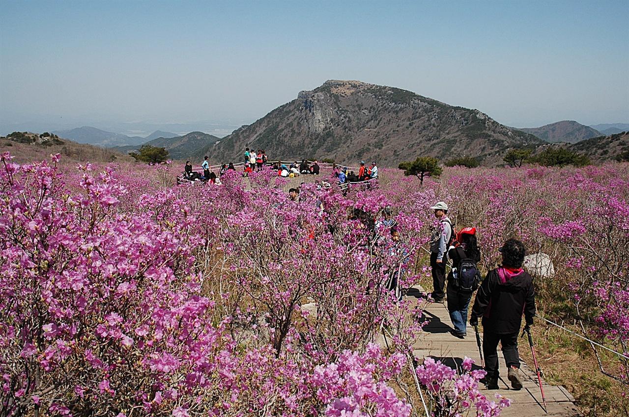 비슬산 원형 전망대  비슬산 진달래꽃 군락지 중심에 원형 전망대가 있는데, 꽃 피는 시기에는 항상 사람들로 붐빈다.