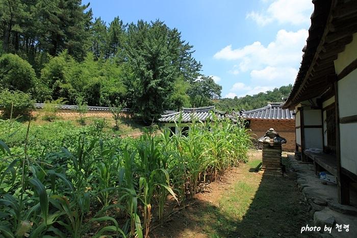 하엽정 채원 하엽정 뒤로는 채소 등을 가꾸는 채원이 있다.
