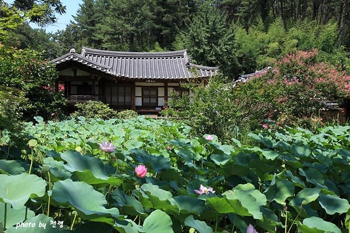 하엽정 안채와 사랑채를 지을 때 흙을 파낸 자리에 연못을 만들고 연을 심어 가꾸어서 정자의 이름을 하엽정(荷葉亭)이라 했다.