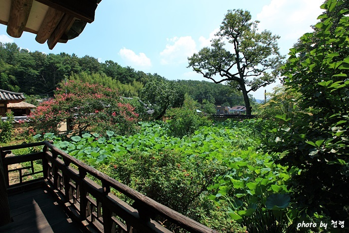 하엽정 하엽정 누마루에선 정원을 한눈에 내려다볼 수 있다.