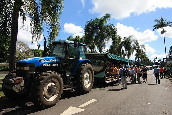 '열대과일세계' 관광용 트랙터 모습. 관광객들은 트랙터를 타고 농장 곳곳을 돌아본다.