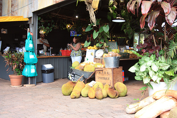 '열대과일세계' 전시장에 진열된 과일들
