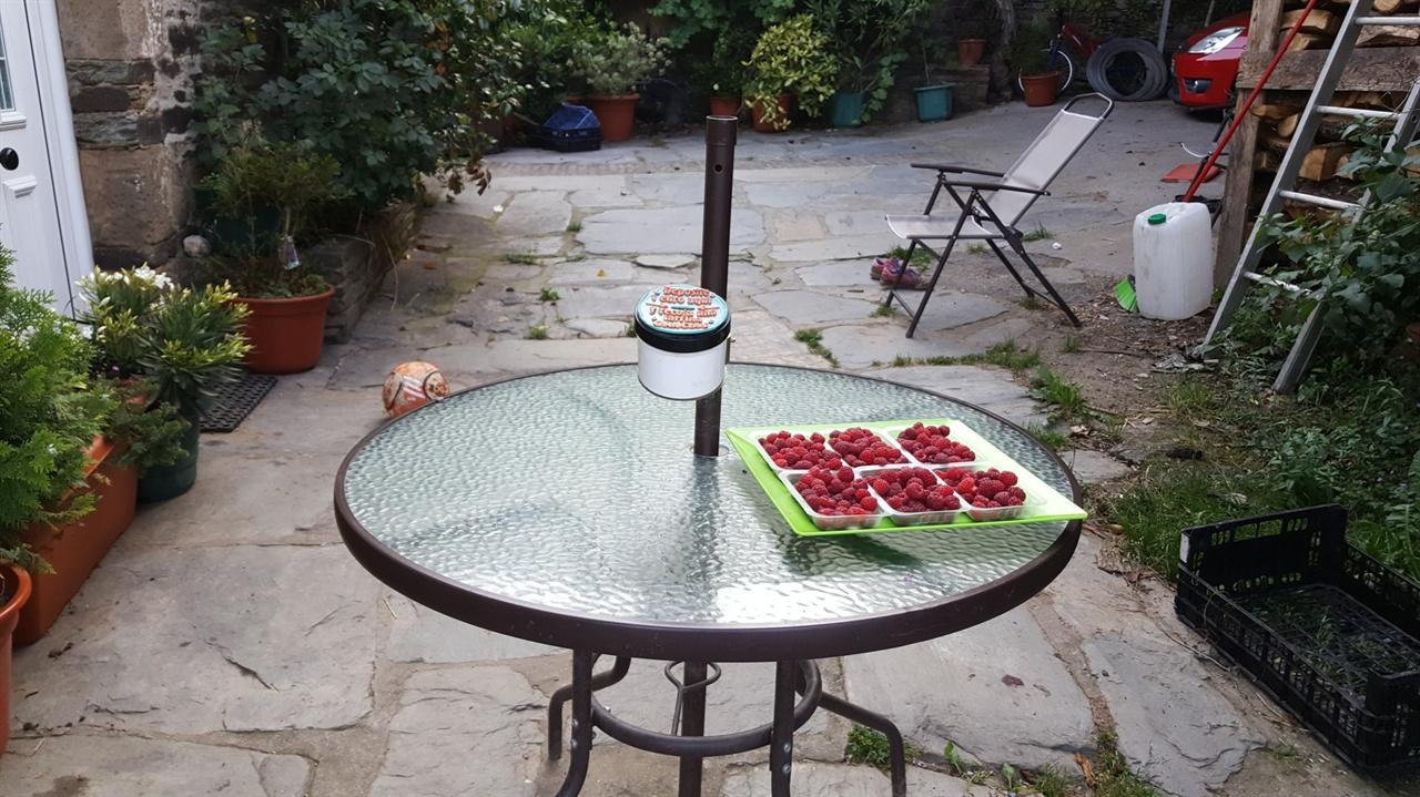 무인 산딸기 판매대(1유로)