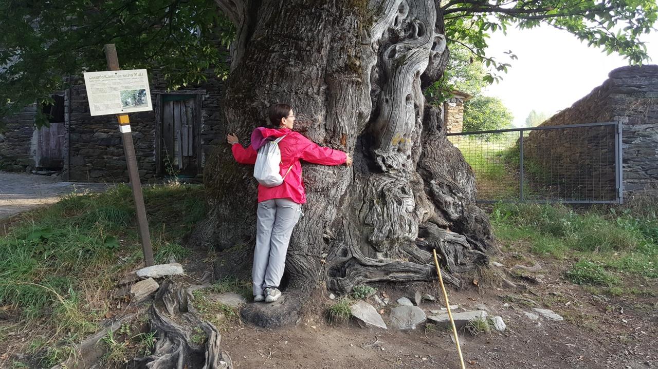 나무와 교감하는 마리아호세