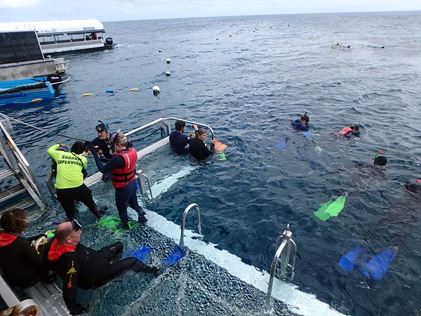 케언즈에서 한시간 반동안 크루즈선을 타고 대산호초인 '그레이트 배리어 리프' 수중탐사 활동은 하루 종일 이어졌다. 사진은 스노클링으로 수중탐사하는  관광객들