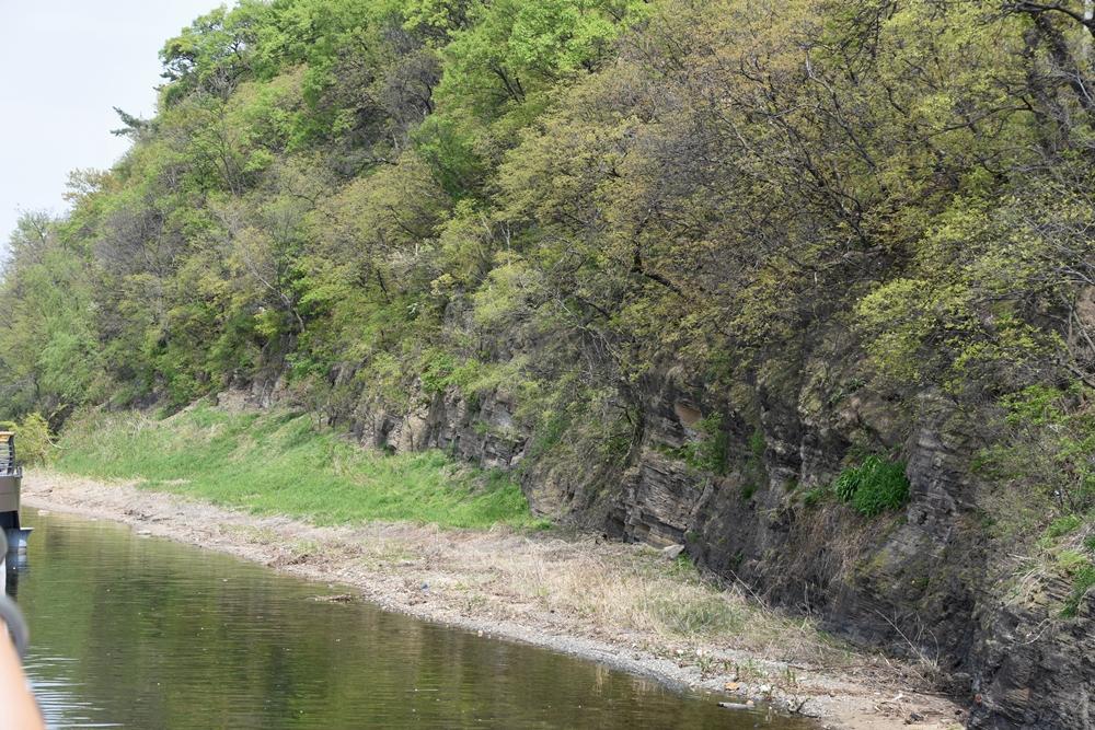 천연산림유전자보호림인 모감주나무군락지의 모감주나무가 푸른 잎새를 드러내고 있다.
