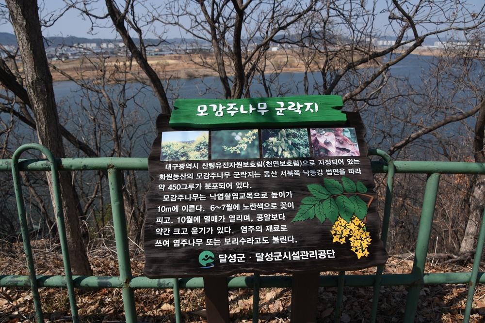 모감주나무군락이 천연산림유전자보호림이라는 설명이 붙은 입간판.