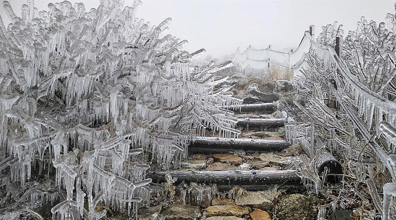 대청봉 설악산의 주봉인 대청봉을 오른 사람은 안다. 이곳의 나무들이 얼마나 키가 작고 또 여린 가지를 지녔는지를 말이다. 그런 마무를 엄청난 양의 얼음이 얼어붙었는데 정말 저 무게를 어떻게 견뎌내고 있을까 싶을 정도로 그 규모가 엄청나다.