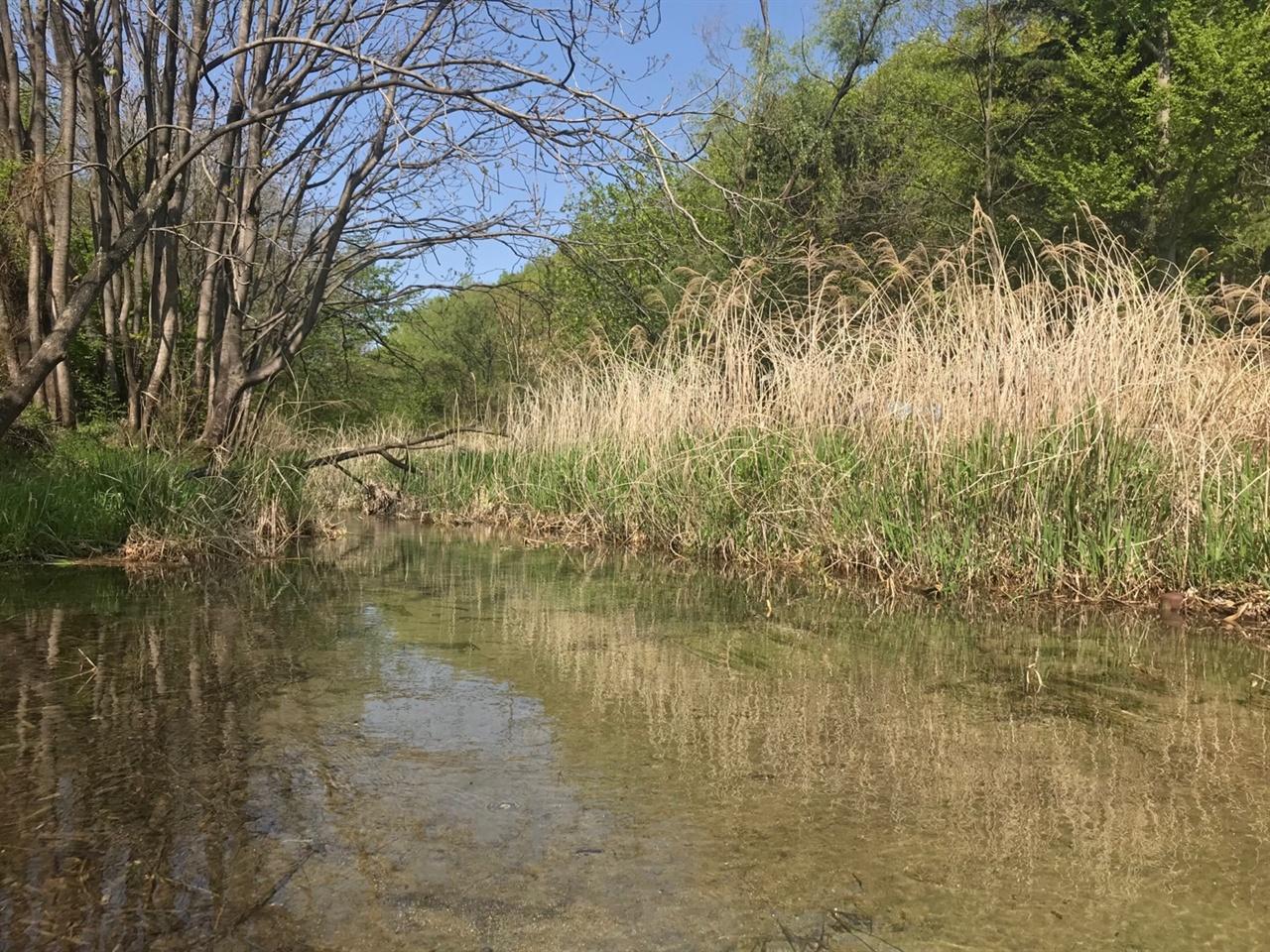 유성천의 모습 맑은 물로 바닦에 그대로 보인다 .