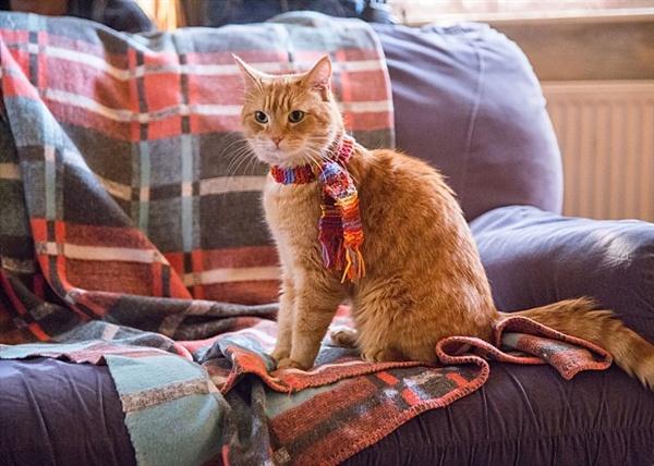영화 <내 어깨 위 고양이, 밥>의 고양이 밥.