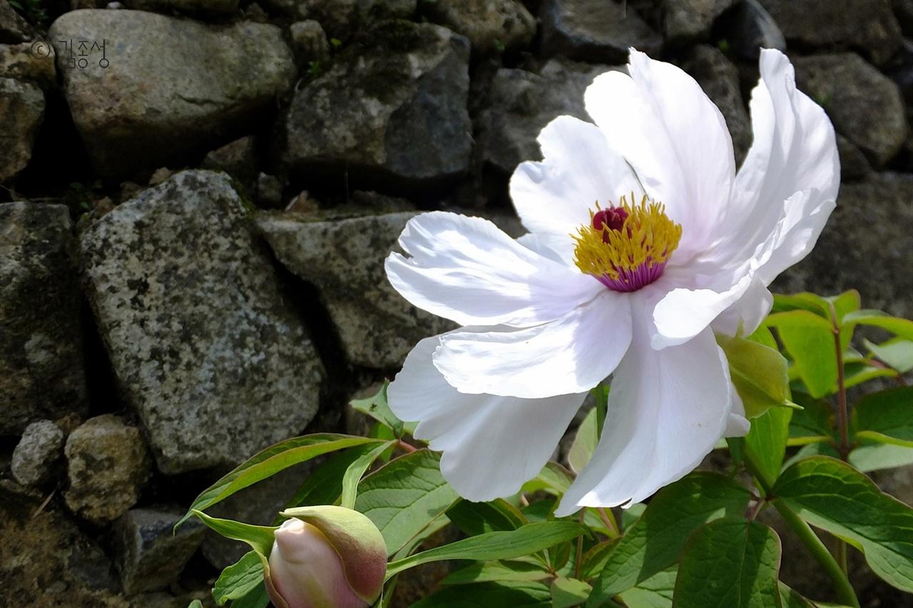 마을 돌담길에 피어난 예쁜 꽃.