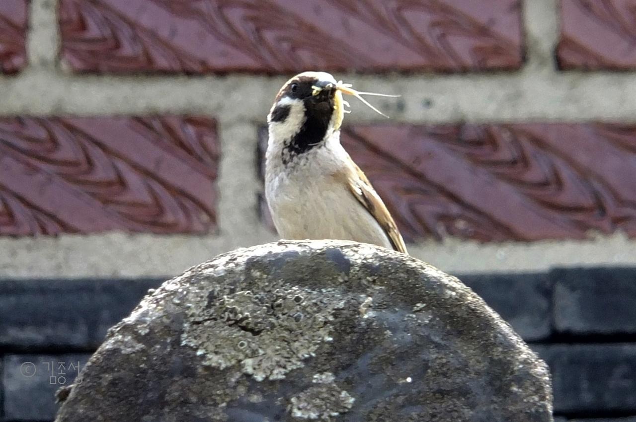 진뫼마을에 사는 참새들.
