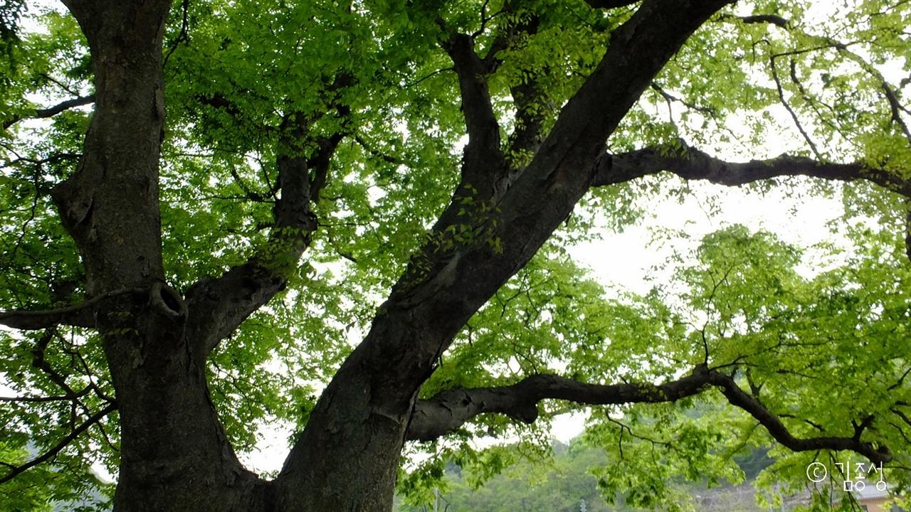 짙어지는 나무의 신록 바라보기.