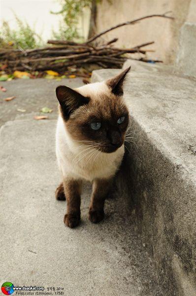 성북동 고양이