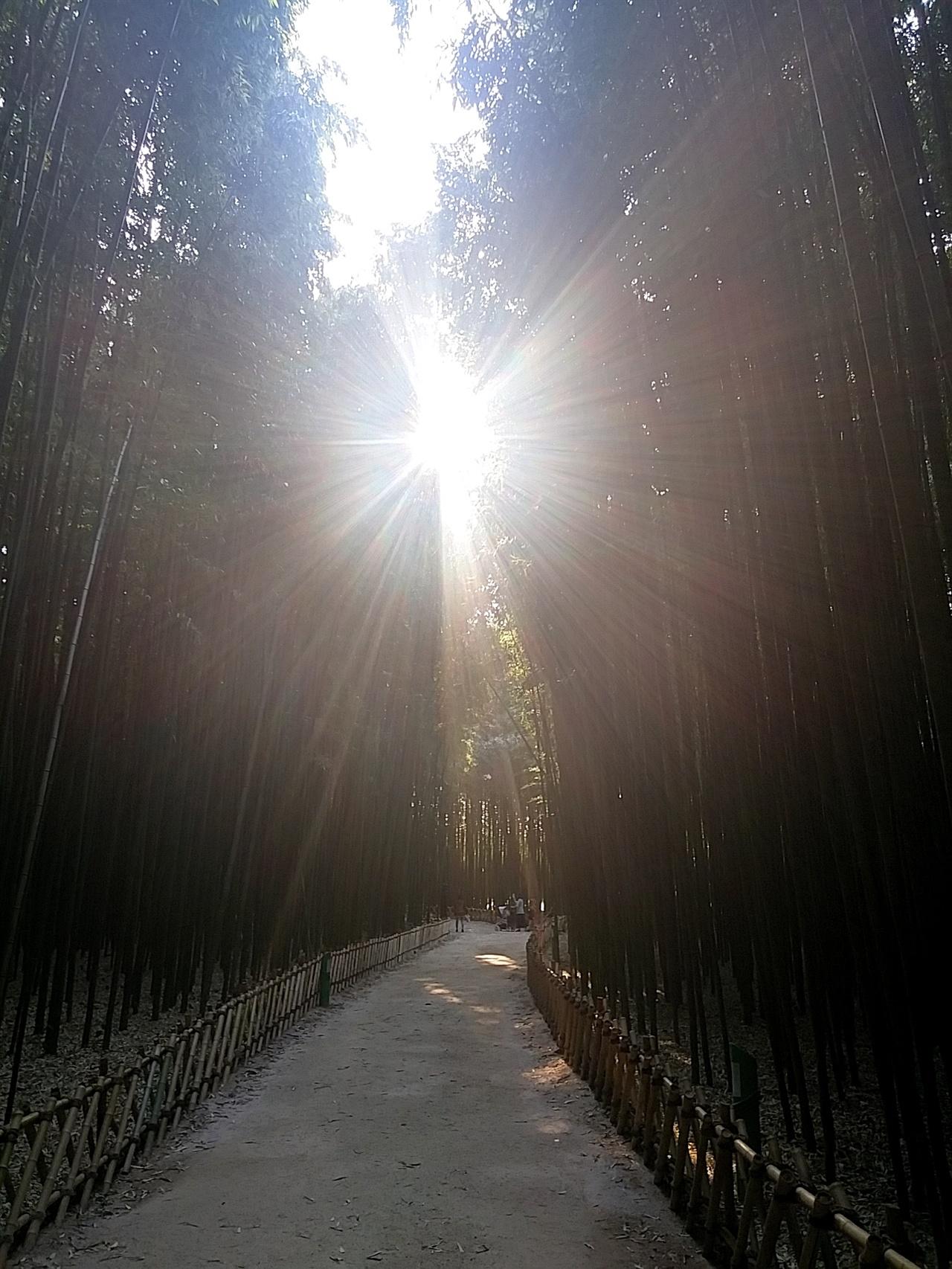 태화강과 태화강 양편에 형성된 4.3㎞의 십리대숲이 어우러져 아름다운 풍광을 연출한다.