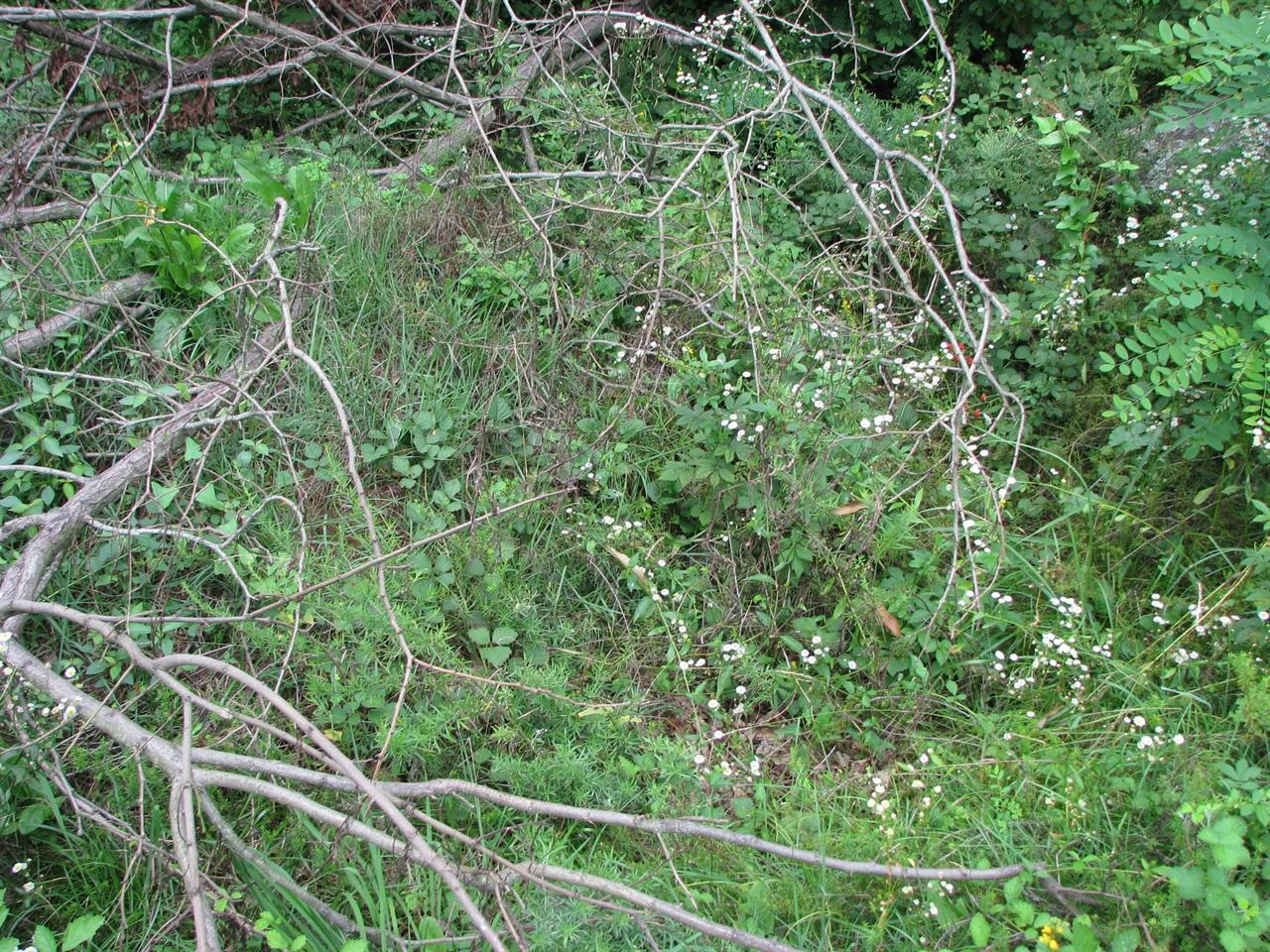 찔레꽃나무로 뒤덮힌 민간인학살 무덤