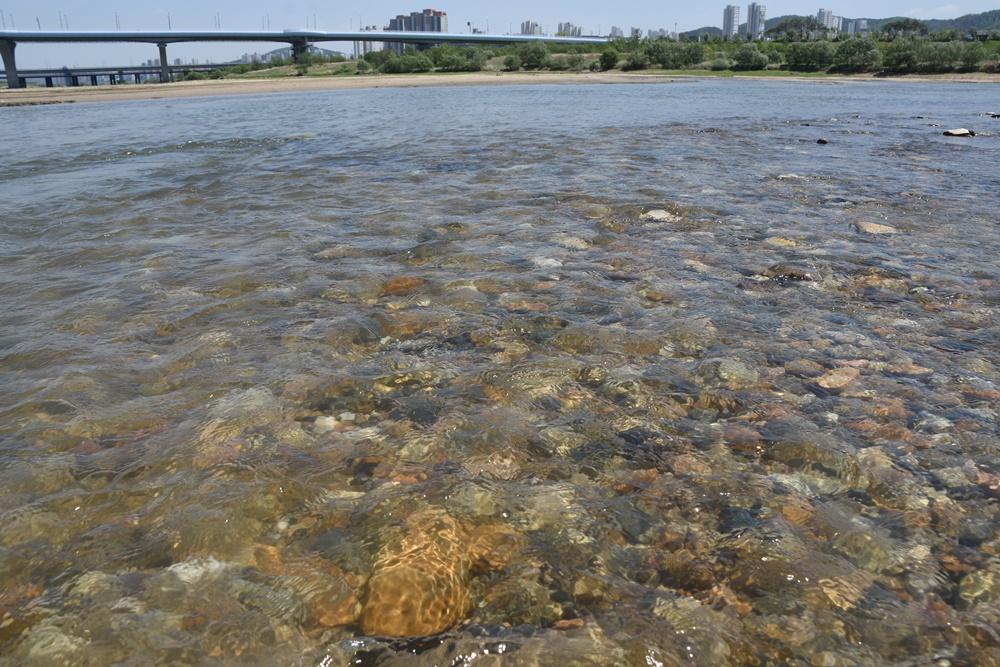 자갈돌이 훤히 보일 정도로 맑은 강물이 흘러내리는 금강의 모습. 수문개방 6개월 만에 금강이 화려하게 부활했다.