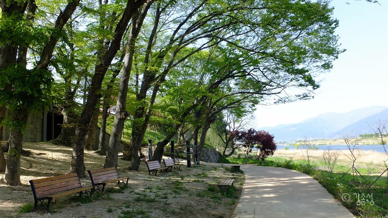 발길이 저절로 머무는 섬진강변 나무들.