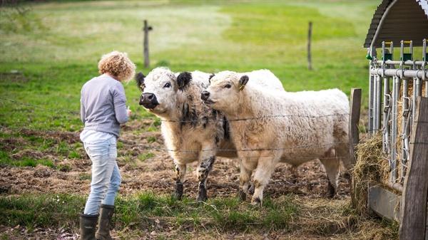 이 모든 폭력은 인간이 소의 젖을 마시고 싶어 하기 때문에 벌어진다.