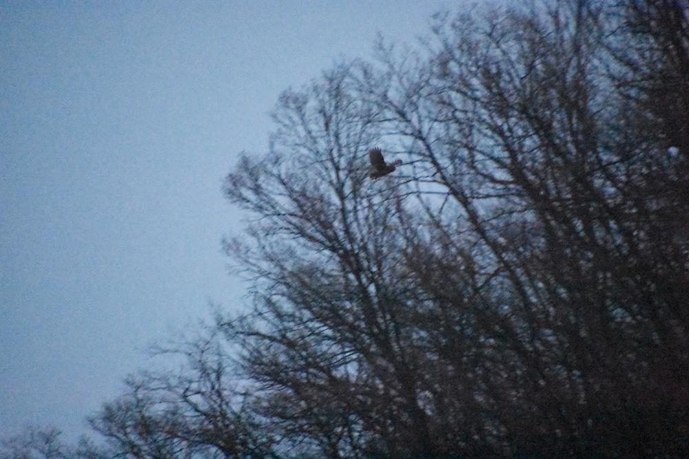 천연기념물이자 멸종위기종인 수리부엉이가 화원동산 하식애에서 날아오르는 것이 카메라에 포착됐다. 이곳이 수리부엉이의 서식처임이 확인된 순간이다.