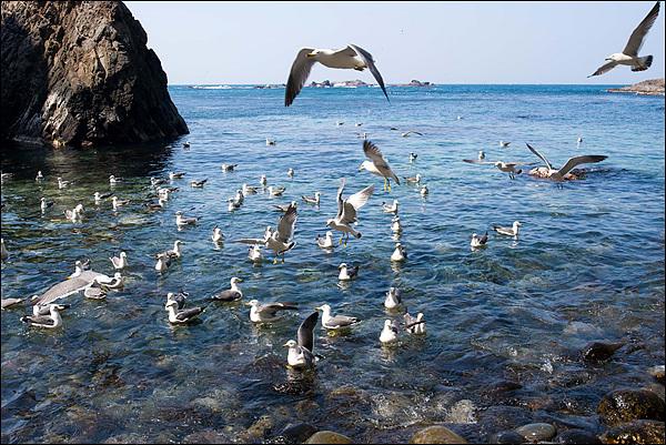 물골 앞 바다에 갈매기들이 날고 있다. 갈매기 뒤로 아스라히 보이는 섬들이 강치가 살았던 가제바위다