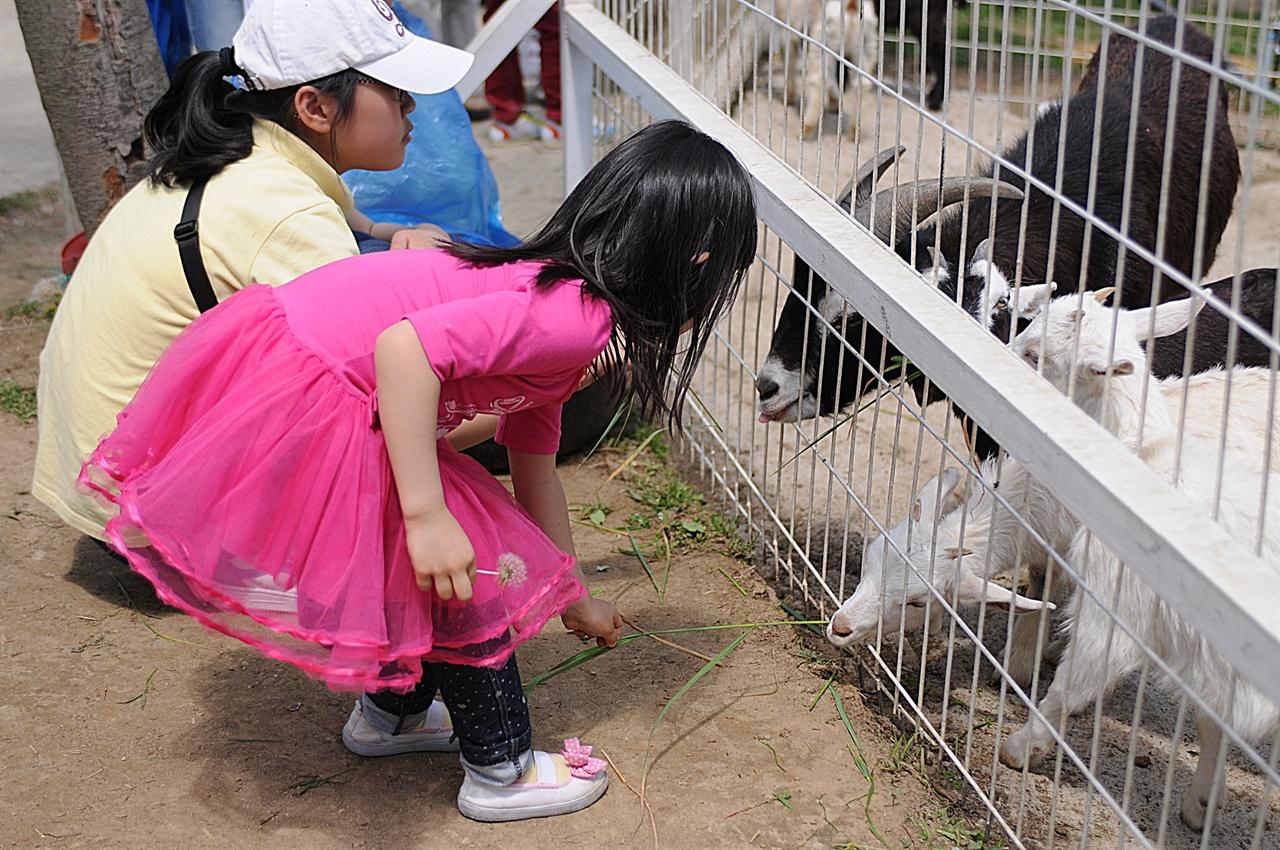 피나클랜드 미니 동물원  아이들이 산양에게 건초를 주고 있다. 피나클랜드는 아이를 동반한 가족여행으로 갈 만한 곳이다.