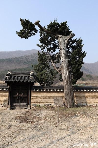 이전인이 심은 향나무 이언적의 아들 이전인이 20세에 심은 향나무로 전해진다.