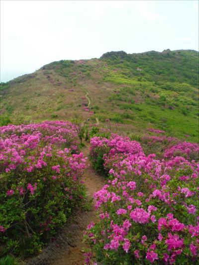 백마능선의 낭만적인 산철쭉 꽃길을 걸으며 참 행복했다.