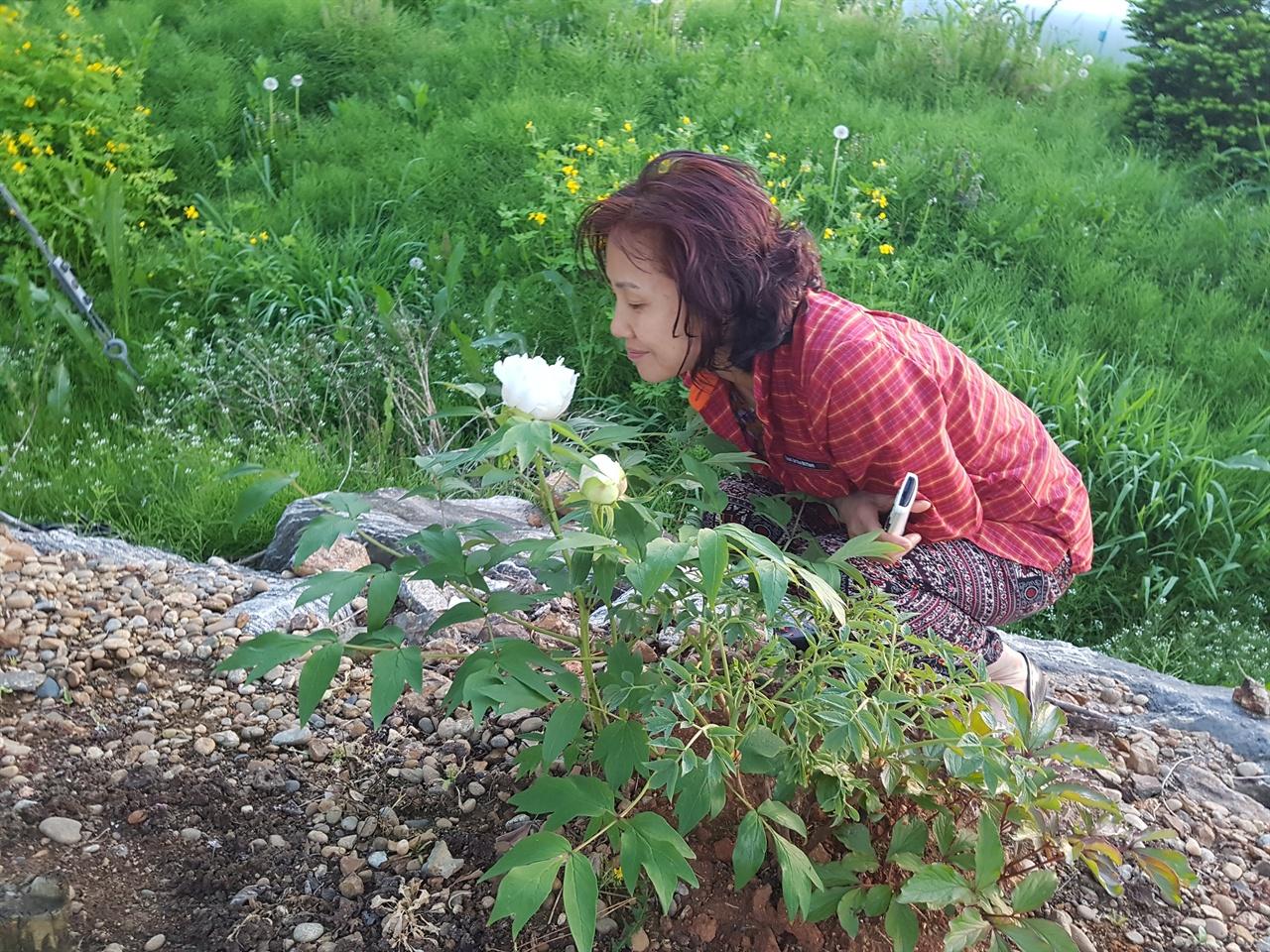 아내가 모란꽃 향기에 이끌려 코끝을 가까이...