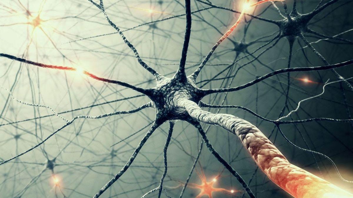 뇌는 신경세포들이 만드는 거대한 네트워크다