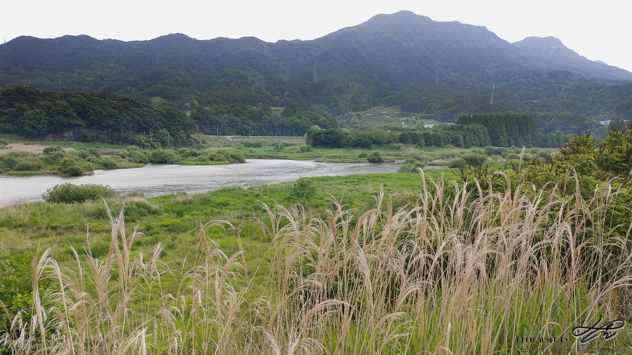 아름다운 섬진강 나무와 습지 사이로 유유히 흐르고 있는 섬진강의 모습.