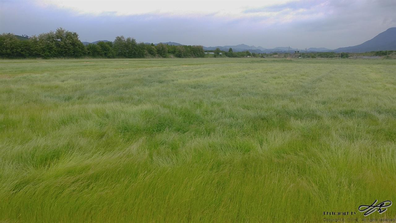 쇠꼴밭 중간에 만난 쇠꼴밭의 풀들이 바람에 일렁이고 있었다.