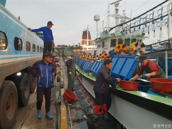 동해안 오징어 조업이 본격화 되면서 동명항이 활기를 띄고 있다. 지난 12일 새벽 어민들이 배에서 오징어를 내리고 있다.
