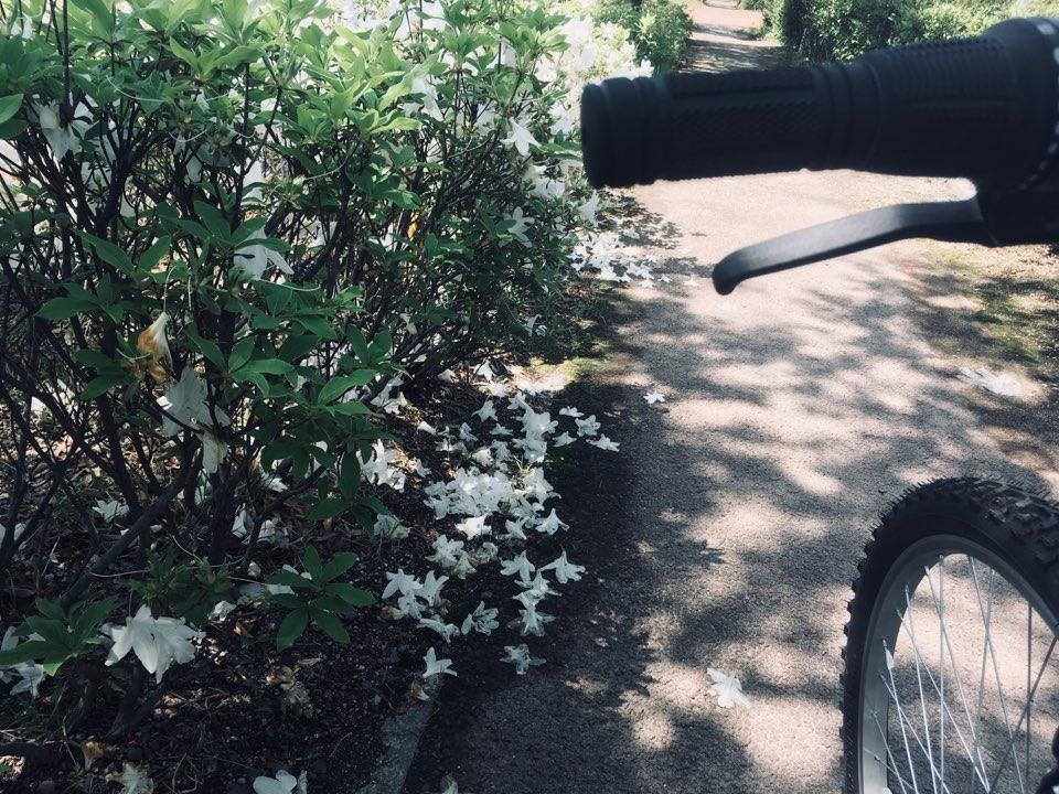 백철쭉 자전거 도로를 달리다 떨어진 백철쭉이 예뻐 잠시 자전거를 세우고 사진을 찍었다