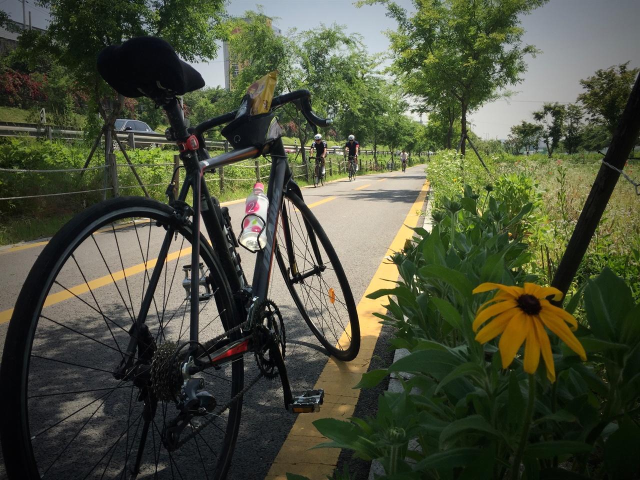 중랑천 자전거길 남들 두 시간 거리를 나는 세 시간 반이나 걸린다. 자전거길에 핀 이꽃 저꽃 참견을 하느라 느리다.