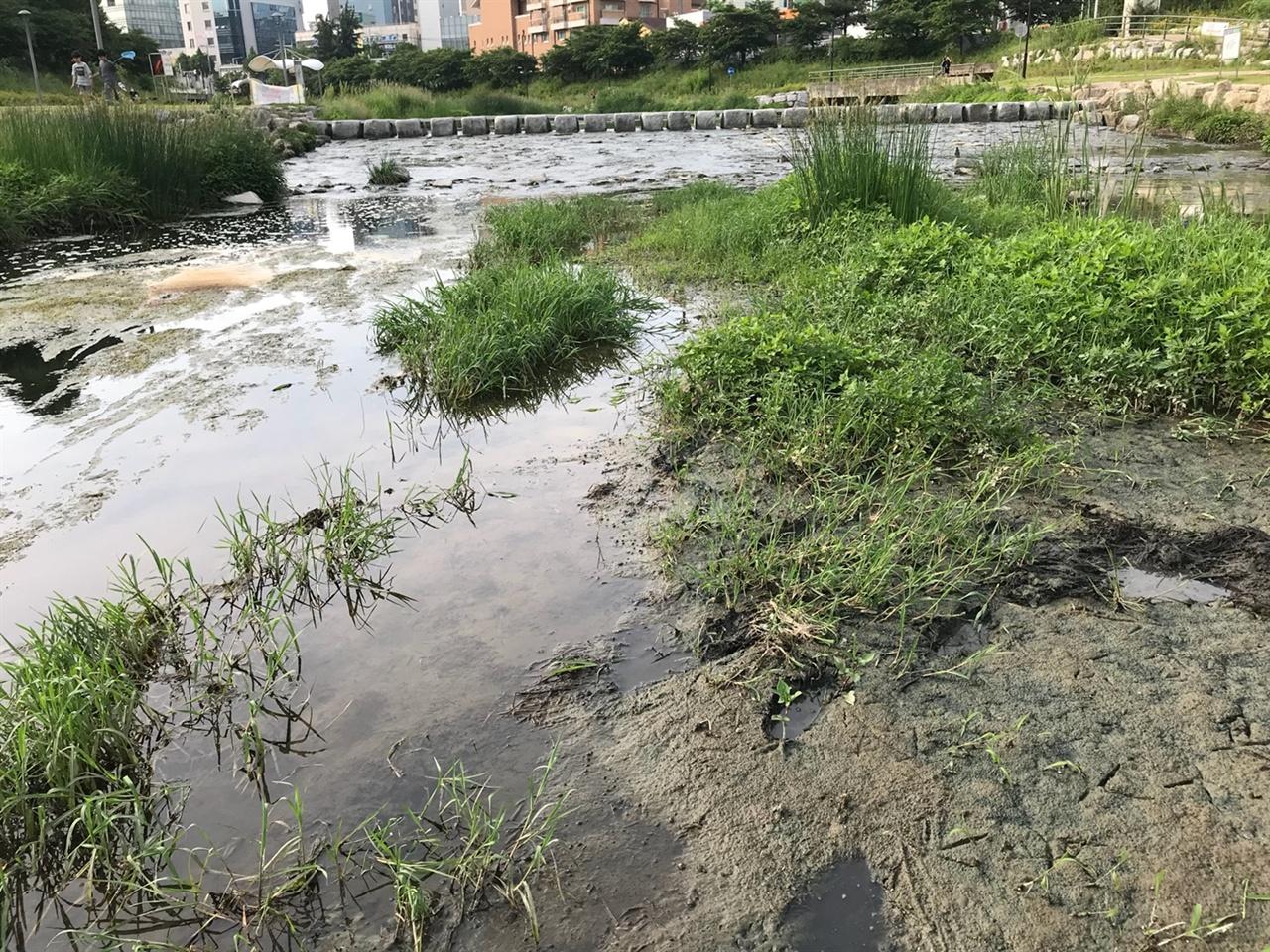 강바닥에 쌓인 펄은 썩어있고, 악취가 풍겼다. 그 속에서 수질 최악의 지표종 실지렁이가 바글바글댔다.