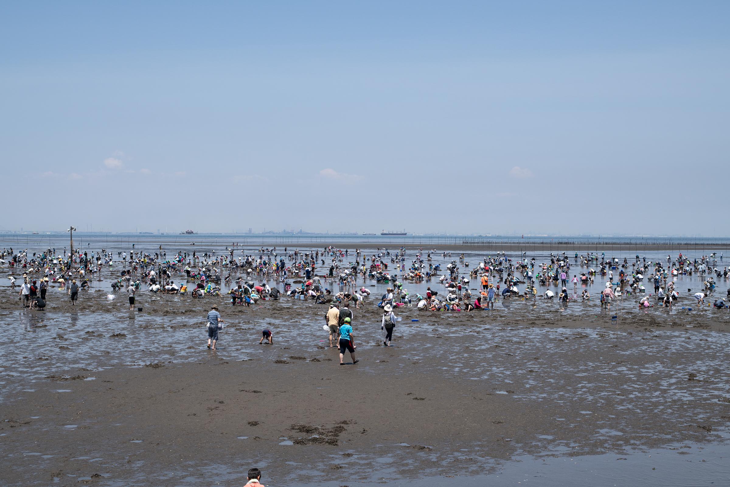 훗쯔해안의 조개캐기 체험장. 수천명의 가족 단위 관광객들이 조개를 캐는 모습이 장관이다.
