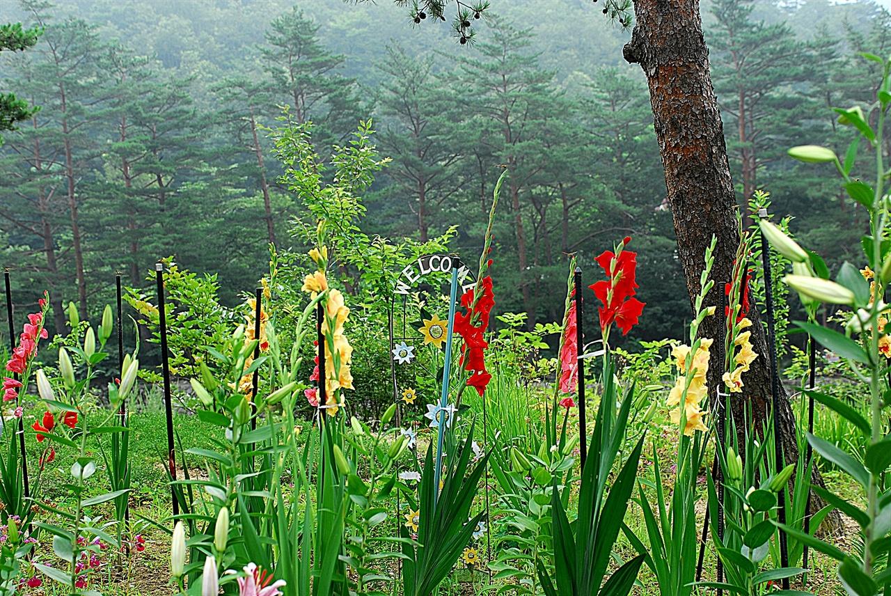 법수치계곡 풍경  어성전~법수치계곡에는 계곡 따라 펜션들이 여럿 있다. 계곡 따라 펜션에서 심은 꽃들도 예쁜 풍경을 이룬다.
